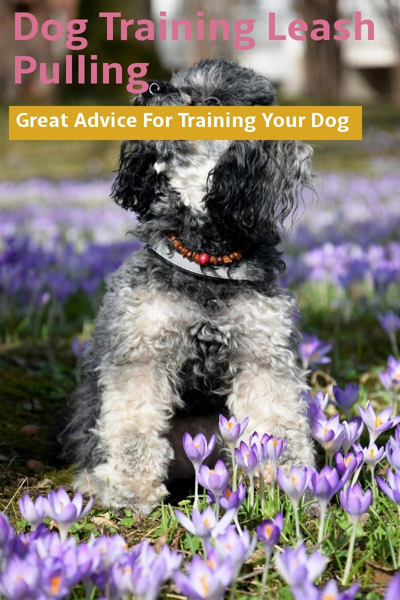 A Few Tricks To Help You On Dog Training Leash Pulling Visit