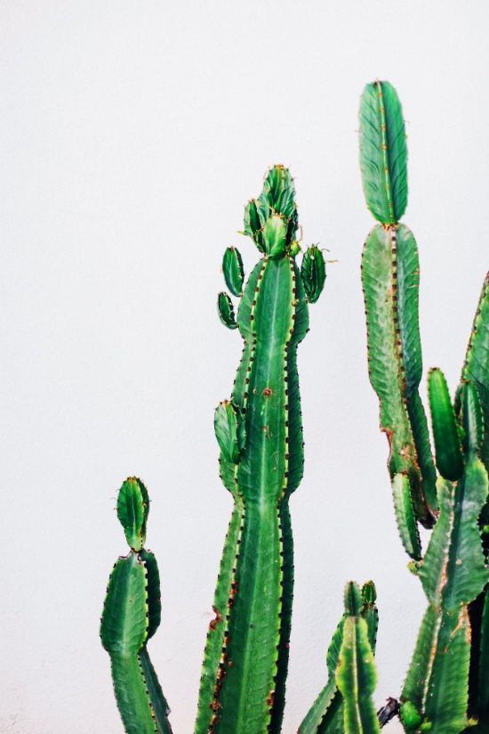 youre a prick, but i love you cactus Art Print, green cactus wall ...