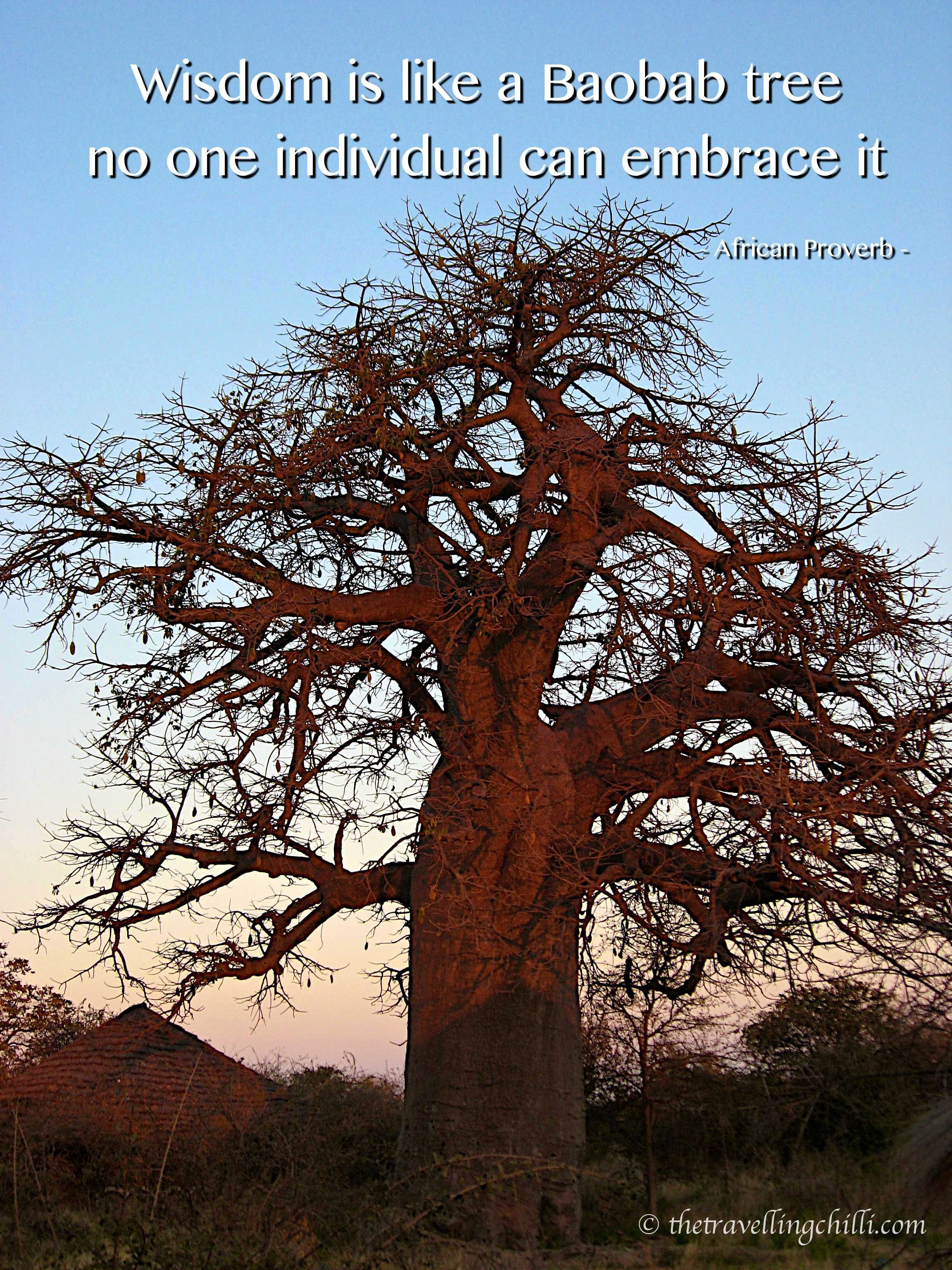 The Baobab tree Mysteries and legends in Africa Baobab