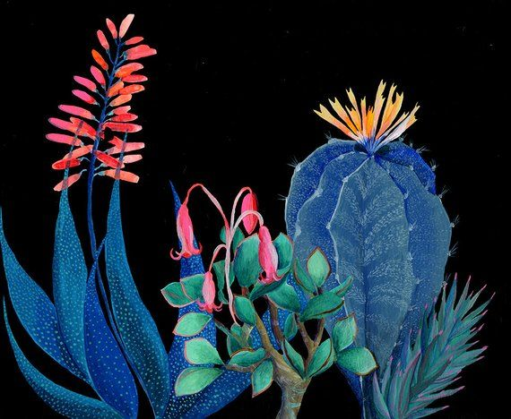 Night succulents garden  illustration  giclee  print is part of Night garden Illustration - artandpeople