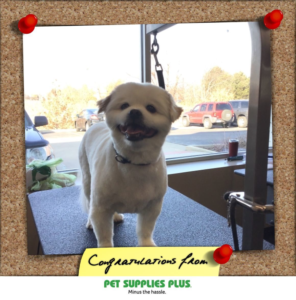 York S Snap From Pet Supplies Plus Orland Park With Images Pet