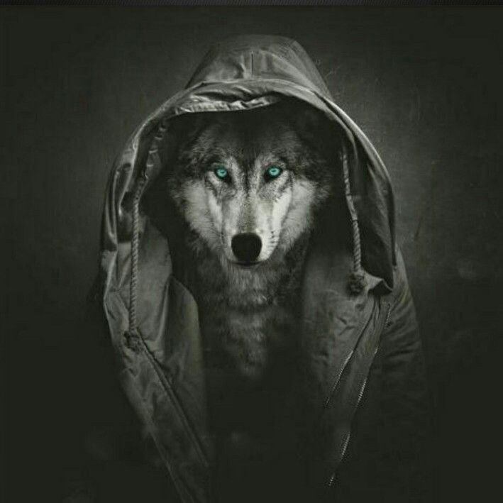 Wolf Iphone Wallpaper: Art, Iphone Wallpaper, Painting
