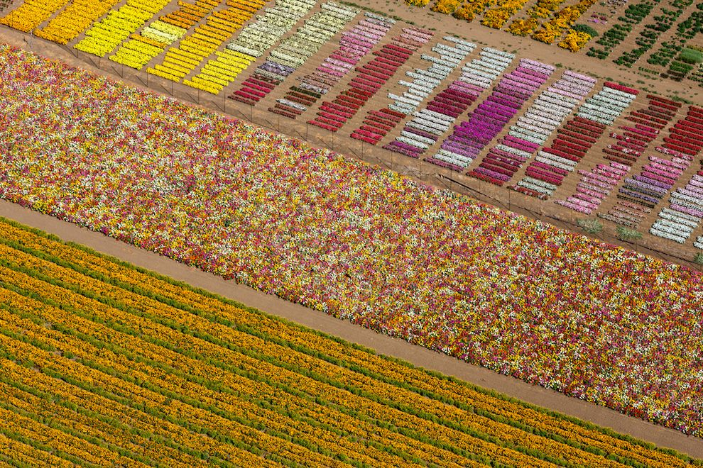 Flower fields, Lompoc, California, USA, 2013. | 22 Stunning Aerial Photos That Reveal A Beauty From Above