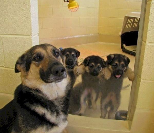 Que linda familia