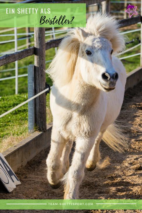 Shetty Als Beisteller Pferdehaltung Reitpferd Schone Pferde