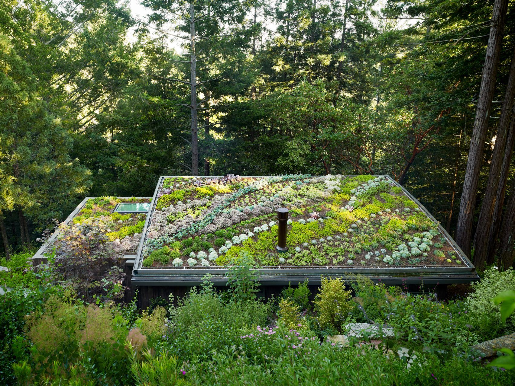 Mill Valley Cabins By Feldman Architecture Roof Garden Rooftop Garden Green Roof