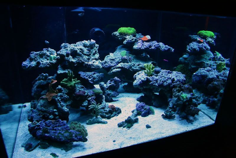 "Top Reef Tank Aquascapes | Current Tank Info: 30x30x18"" 70 ..."