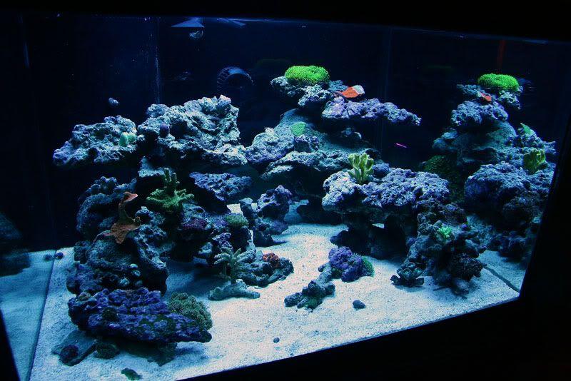 6 Gallon ReadyReef Fluval Edge Nano Cube Aquarium. Nice Mini Reef.    ReadyReef Nano Cubes   Pinterest   Aquariums, Fish And Fish Tanks