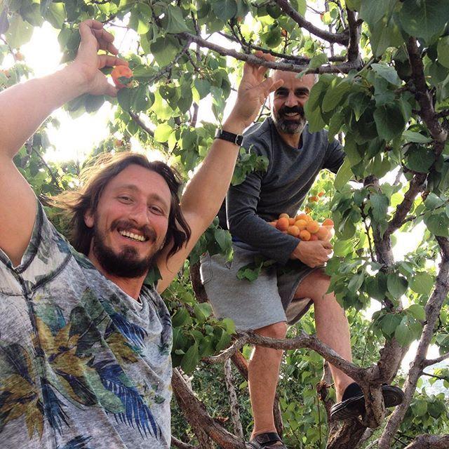 Kayısı ağacımıza teşekkür ederiz! #gumuslukakademisi