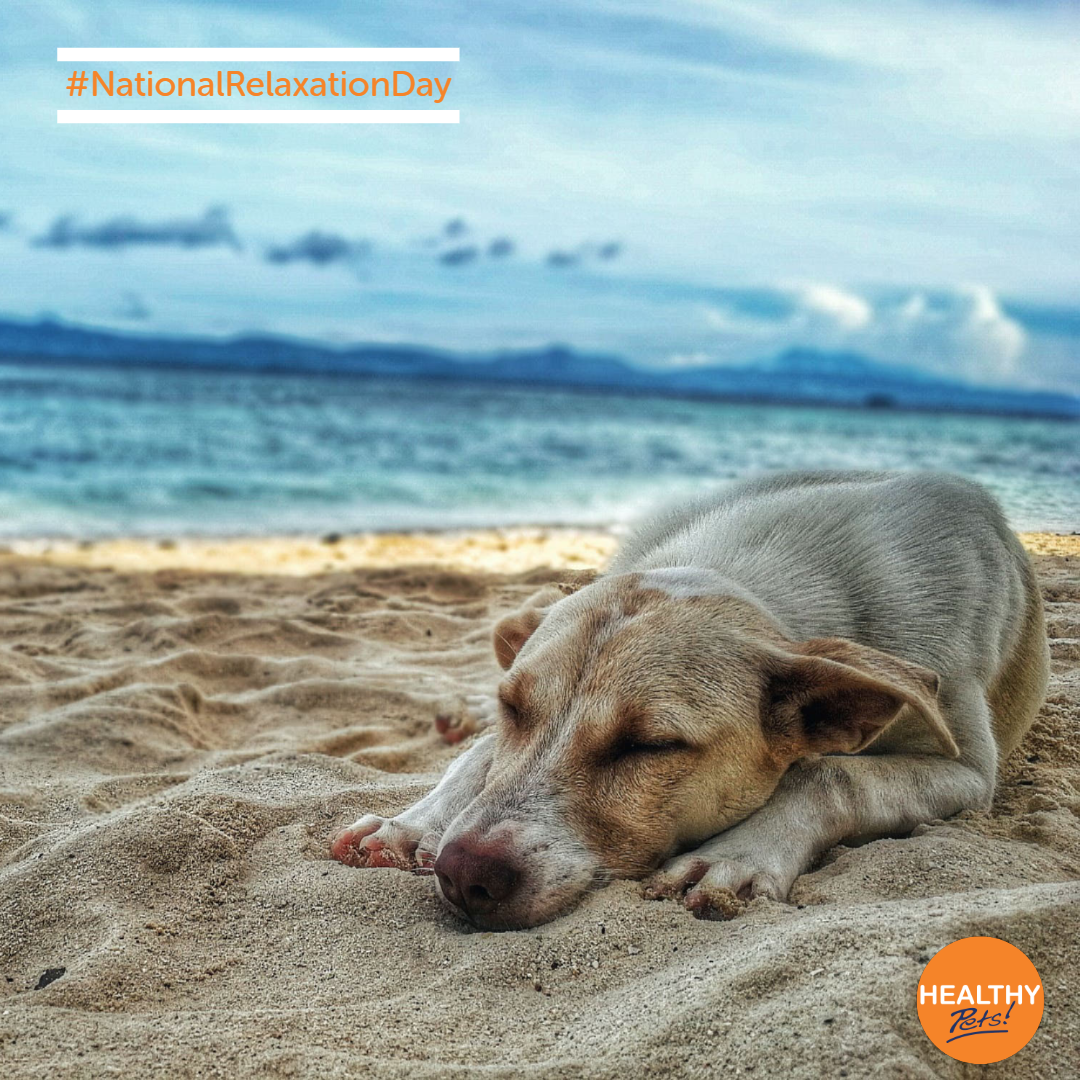 And Relax Today Is Nationalrelaxationday So Remember To Take Some Time To Chill Out With Your Pet Easiest Dogs To Train Dog Training Dog Training Obedience