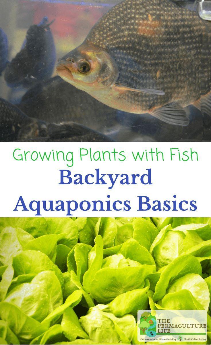 Growing Plants & Fish Backyard Aquaponics Basics