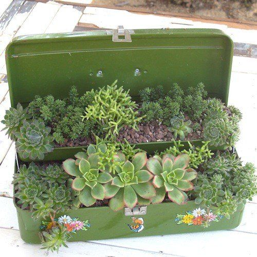 Potted Succulents. Nice way to show your succulents love :)