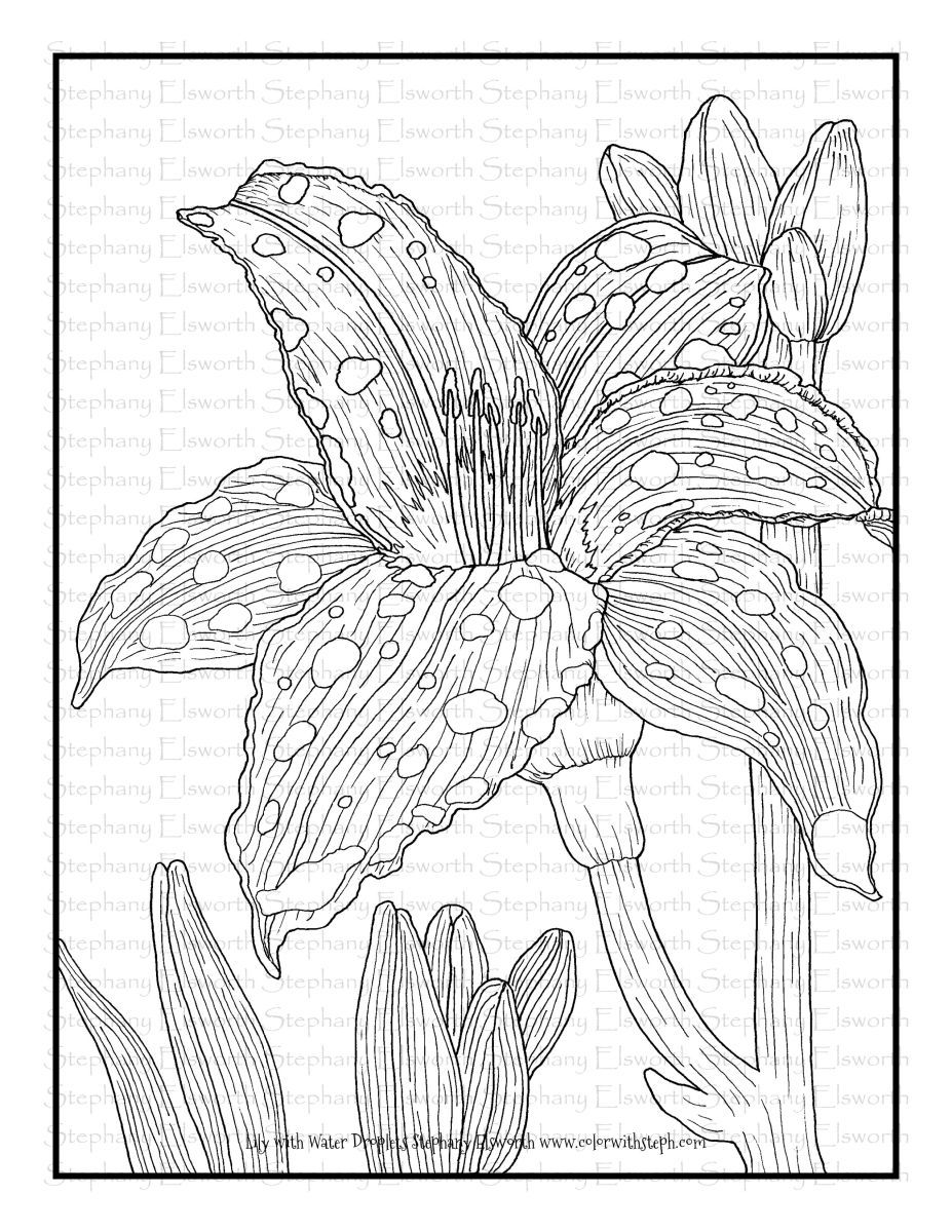 Lily With Water Droplets Free Printable Coloring Page Color With Steph Coloring Pages Printable Coloring Pages Free Coloring Pages