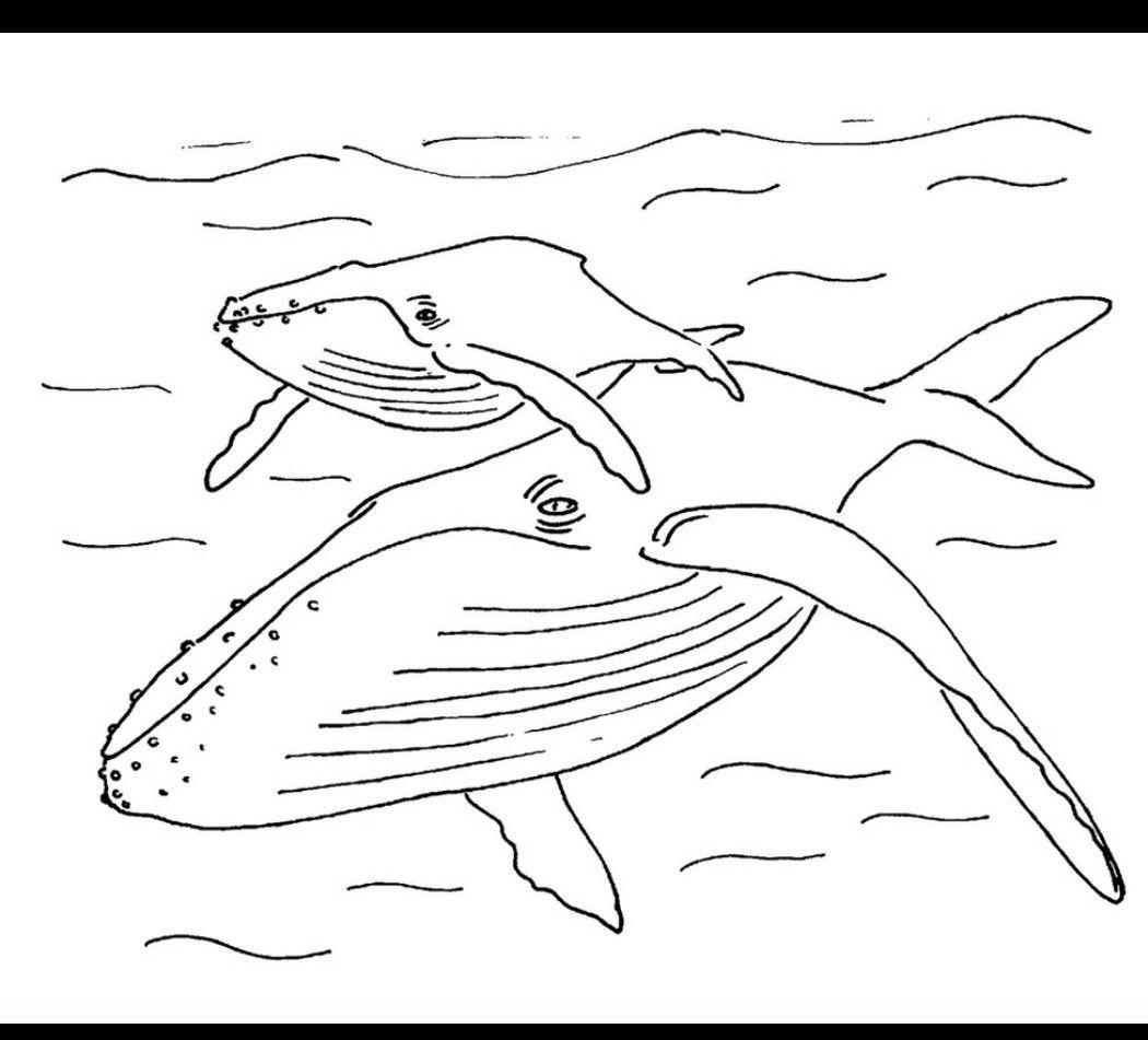 Pin de Stephen Clariday en coloring book / transfers | Pinterest