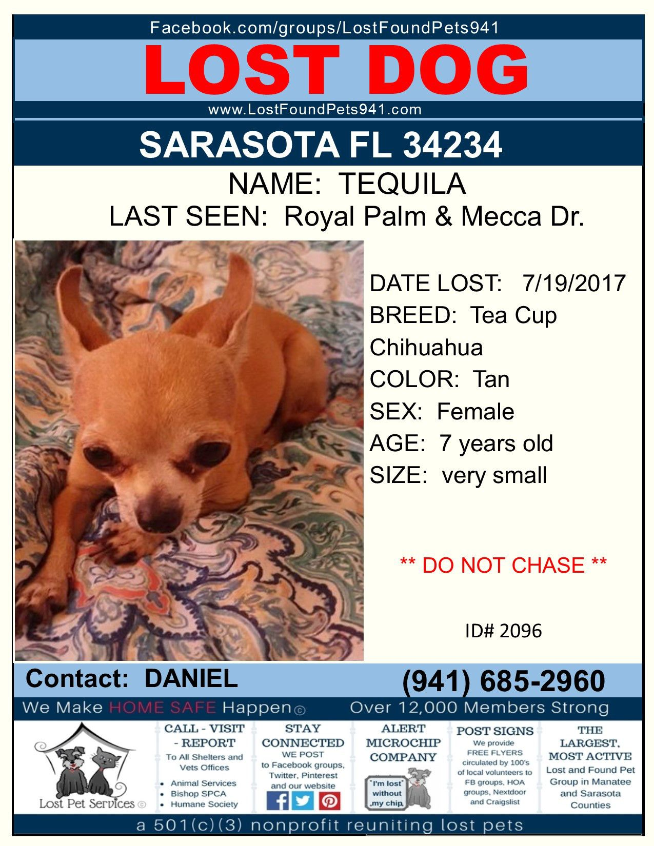 Have You Seen Tequila Lost Dog Chihuahua Teacup Sarasota