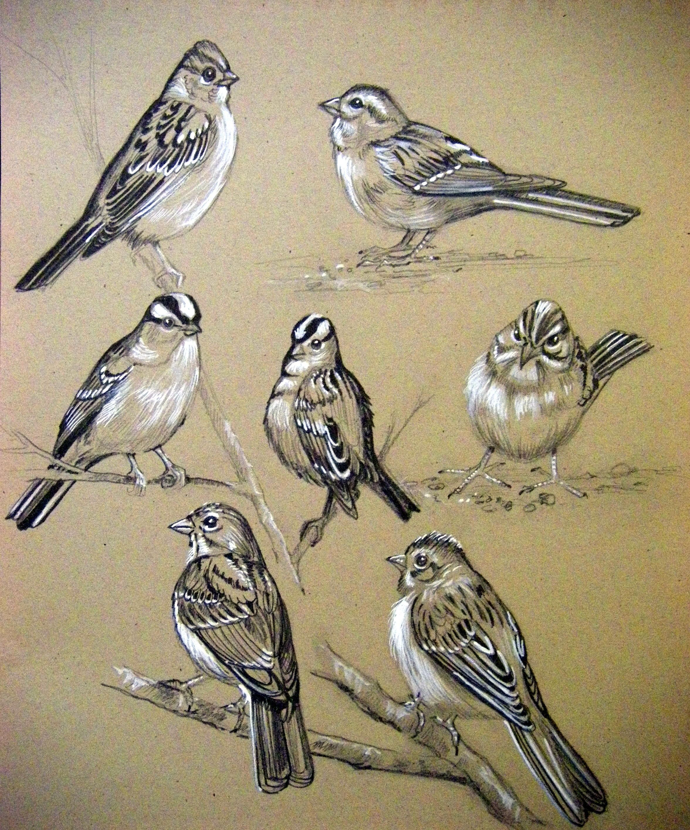 Images For > Two Sparrows Drawing | Art | Pinterest ...