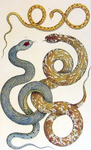 Period Snake Print Color Dessins Botaniques Dessin Et Motifs Animal