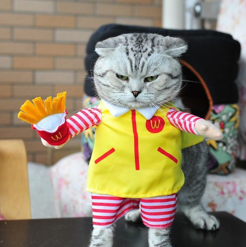 Funny Cat Outfit With Images Pet Costumes Pet Costumes For