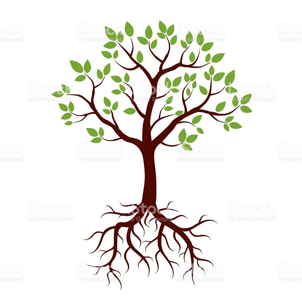 Shape Of Tree Roots And Green Leafs Vector Illustration Illustration Baumwurzel Vektorzeichnung