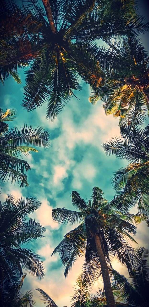 Download Bel Air Palms Wallpaper By Sneks99 89 Free On Zedge Now Browse Million Papel De Parede De Natureza Papel De Parede Interativo Wallpaper Paisagem