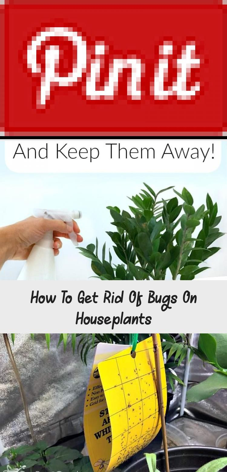 How To Get Rid Of Bugs On Houseplants GARDEN in 2020