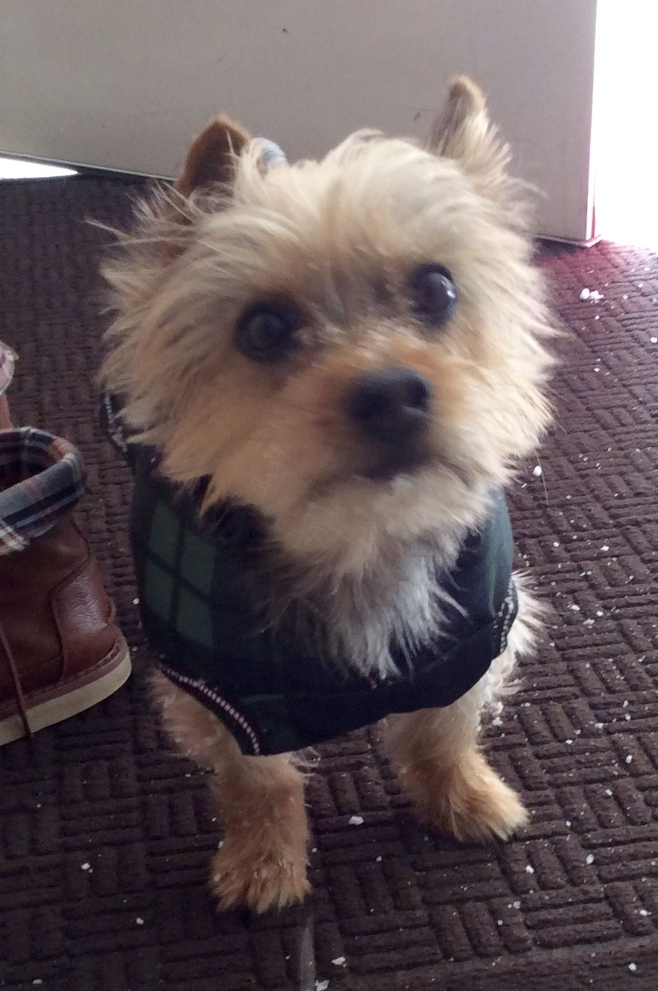 Lost Dog Male Norwalk Ct Usa 06854 Losing A Dog Dogs Dog