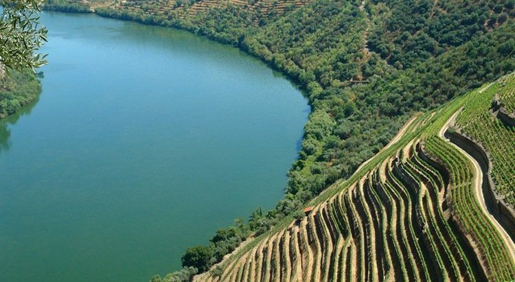 Douro Region Wine Tour with Vineyard Lunch | Full day Tour