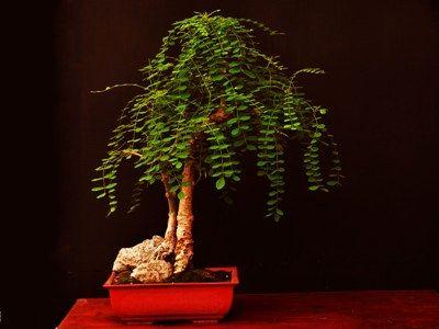 Bonsai Haus pin by m on beautiful bonsai bonsai