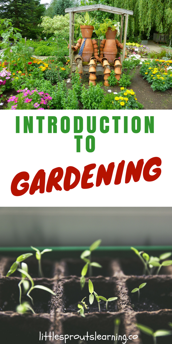 9 Easy To Grow Vegetables For The First Time Gardener With Images