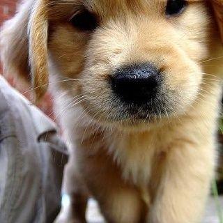 O my goodness so #cute
