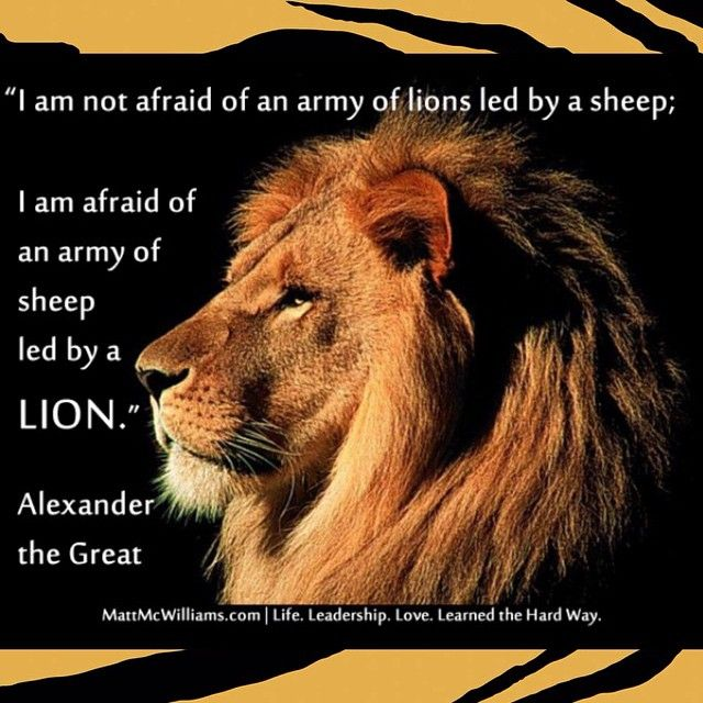 Lion Sheep Quote: Pin By Toni De On Lioness=The Queen