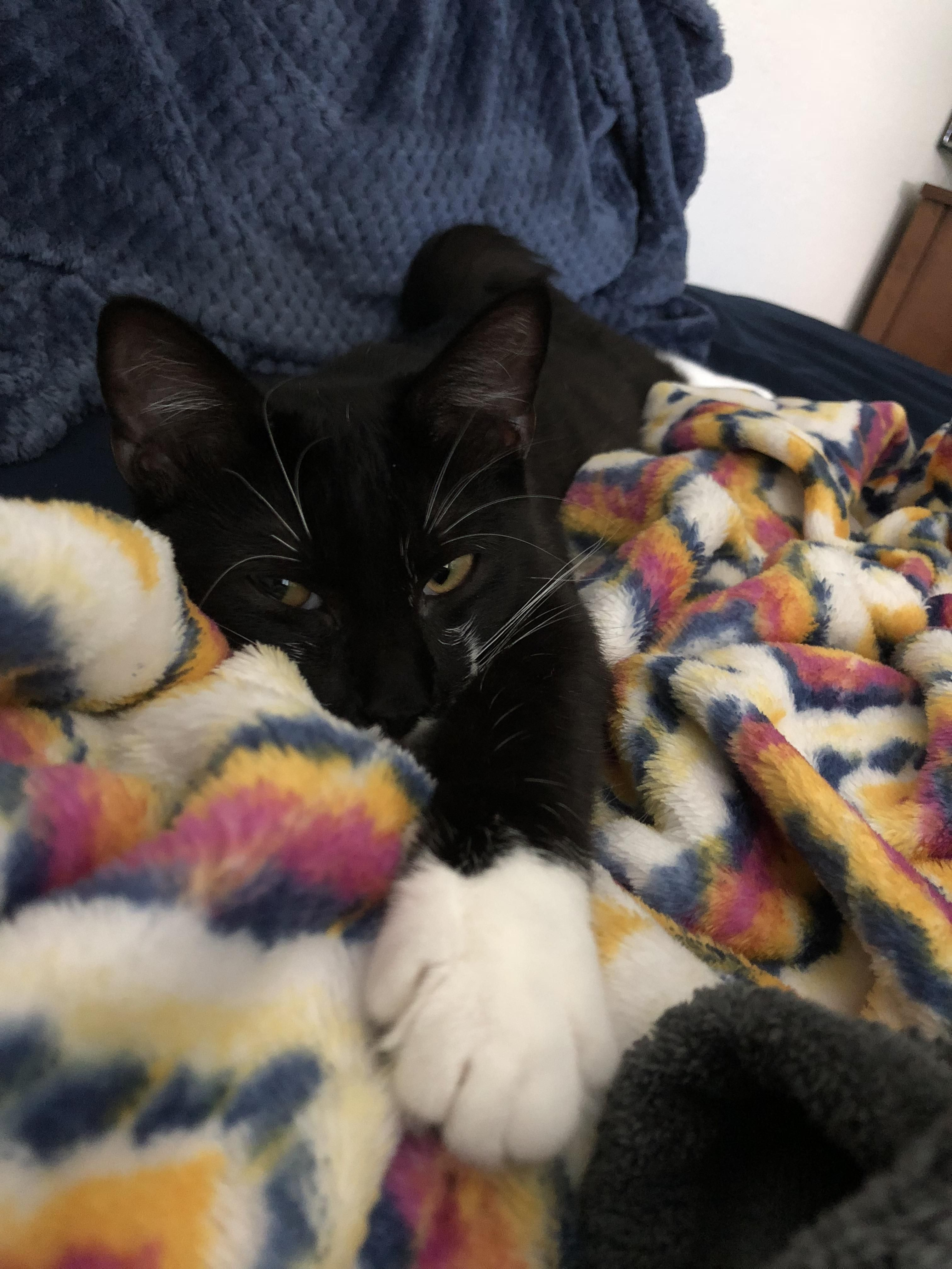 Reddit This Is Levi He Likes To Feet That Are Under Blankets And Sit