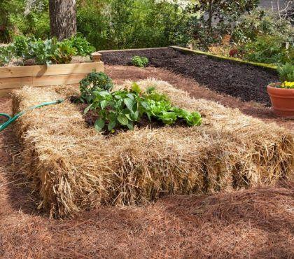Hochbeet Anlegen Tipps Zum Richtigen Befullen Und Bepflanzen Erhohte Gartenbeete Gartenliege Erhohte Beete
