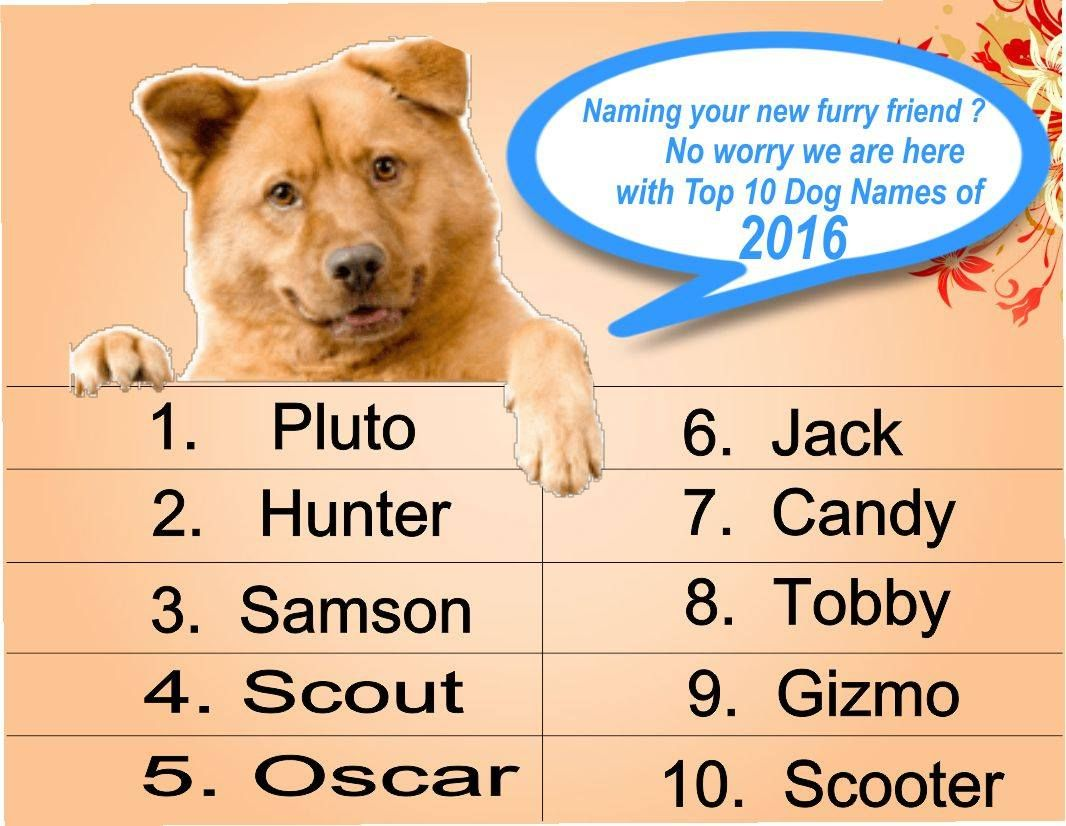 Top 10 Funny Unique And Cool Dog Names 4petneeds Petfoods