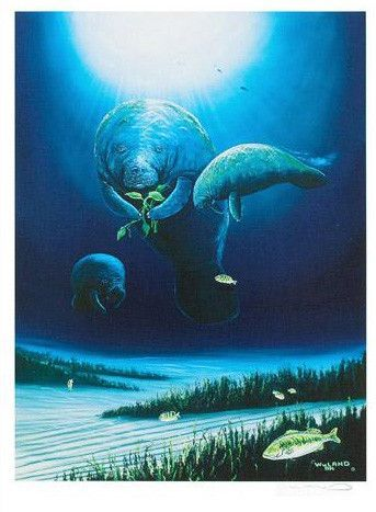 Manatee Visit - Limited Edition Lithograph on Paper by Wyland