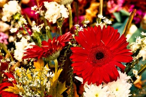 باقة ورد جميلة باقات ورد صباحية جميلة جدا باقة ورد كبيرة Zina Blog Plants