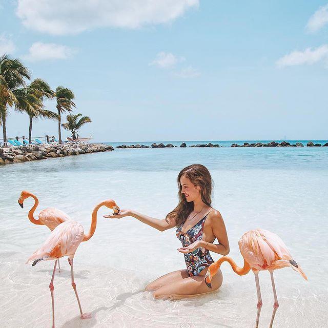 Flamingo Beach Aruba Caribbeanhotspots Katerinastavreva