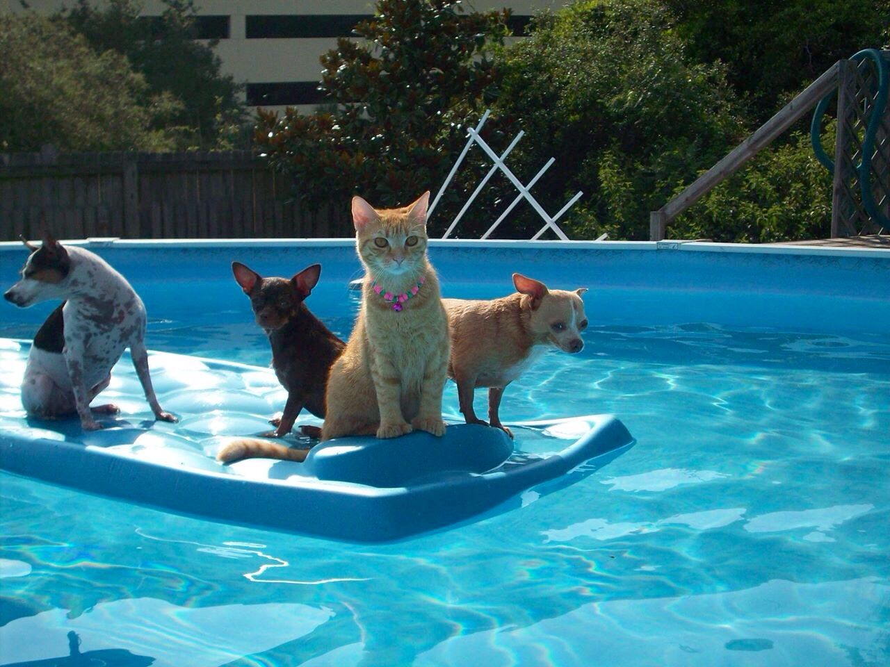 Not Something You See Everyday Although I Wish I Did Pool Pals Pinterest Dog Cat Dog