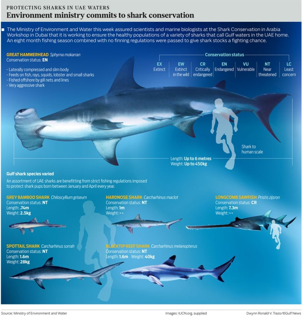Environment ministry commits to shark conservation | The"|982|1017|?|en|2|86f625eed4d5214d273e2620f4624543|False|UNLIKELY|0.28808677196502686