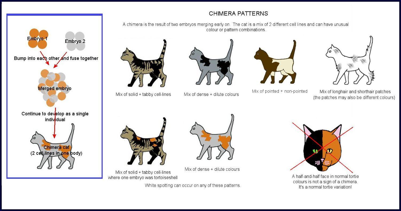 Cat Colours Diagram Chart