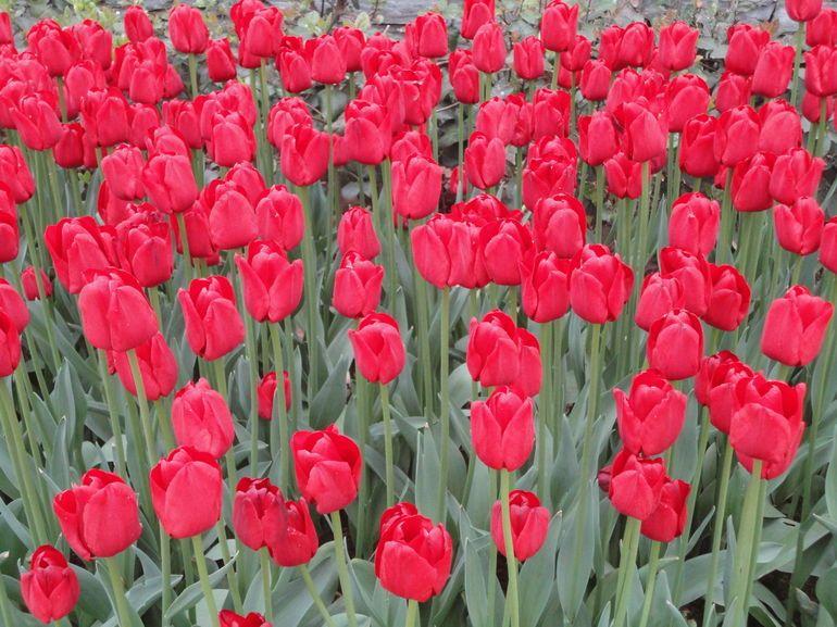 See The Tulip Garden At Topkapi Palace Turkey Istanbul Topkapi Istanbul Istanbul Tours