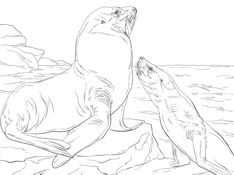 Steller Sea Lions Coloring Page Free Printable Coloring Pages Lion Coloring Pages Coloring Pages Bear Coloring Pages
