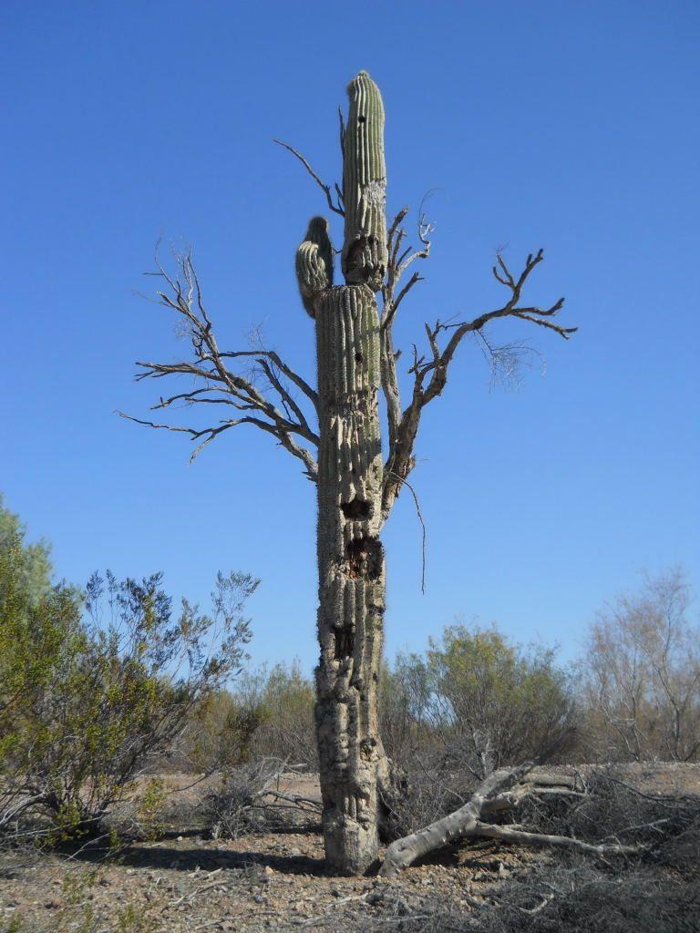 Tree cactus. #holdzit