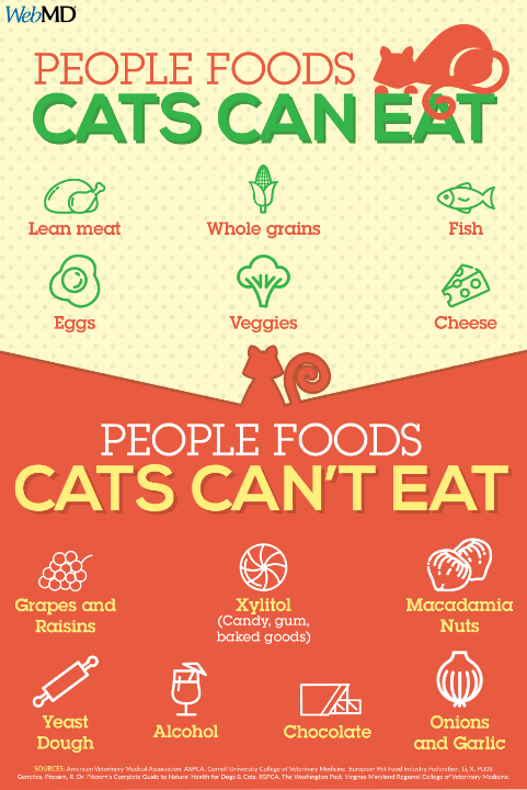 People Foods Cats Can Eat Foods Cats Can Eat Cat Nutrition Homemade Cat Food