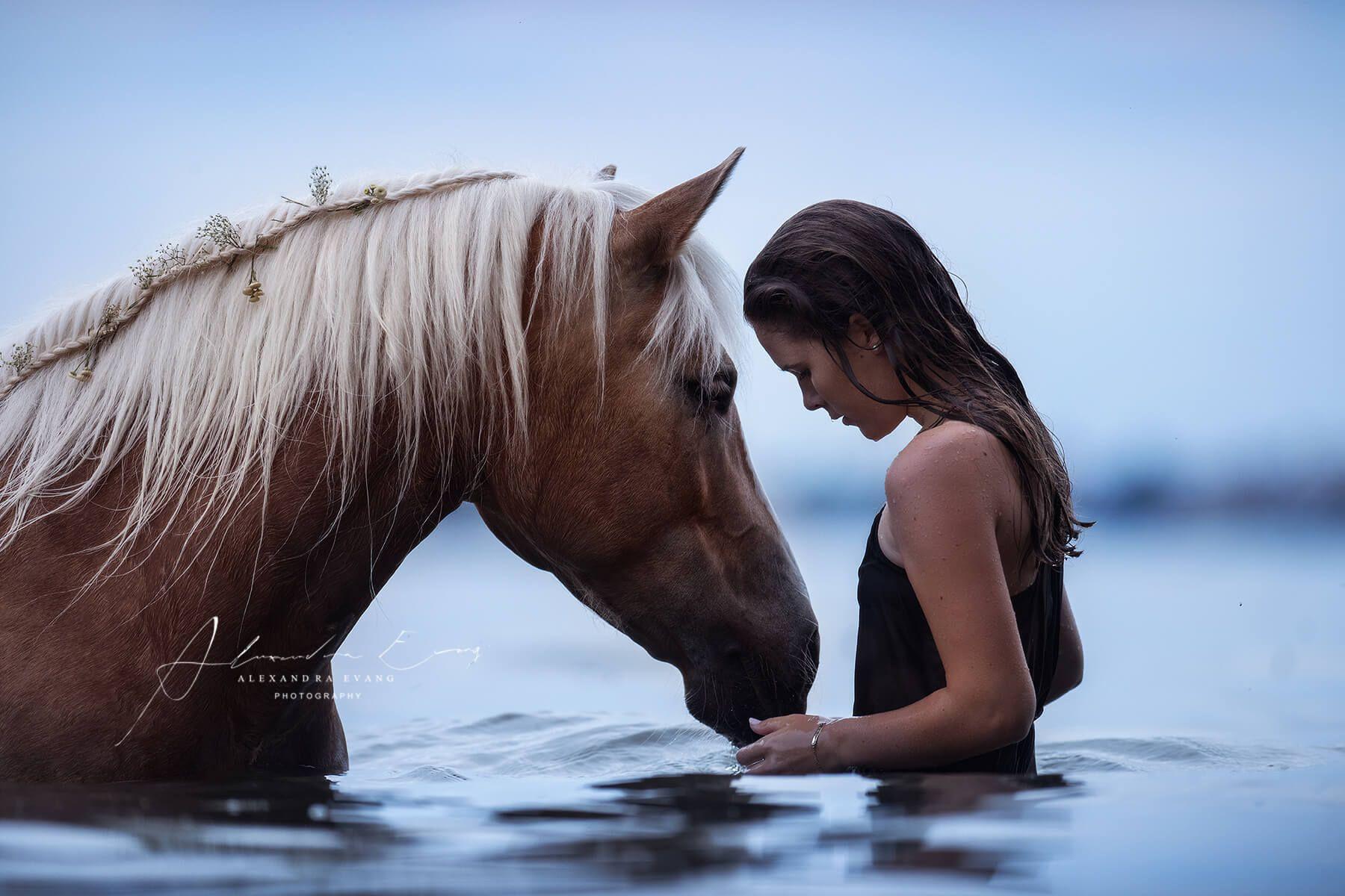 portfolio alexandra evang photography girls best friend pferde hintergrundbilder pferde