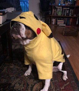 Starter Pokemon Dog Costumes made by thecaliforniachi