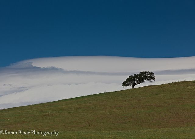 Oak with Lenticular Cloud, Santa Ynez Valley, CA by Robin Black