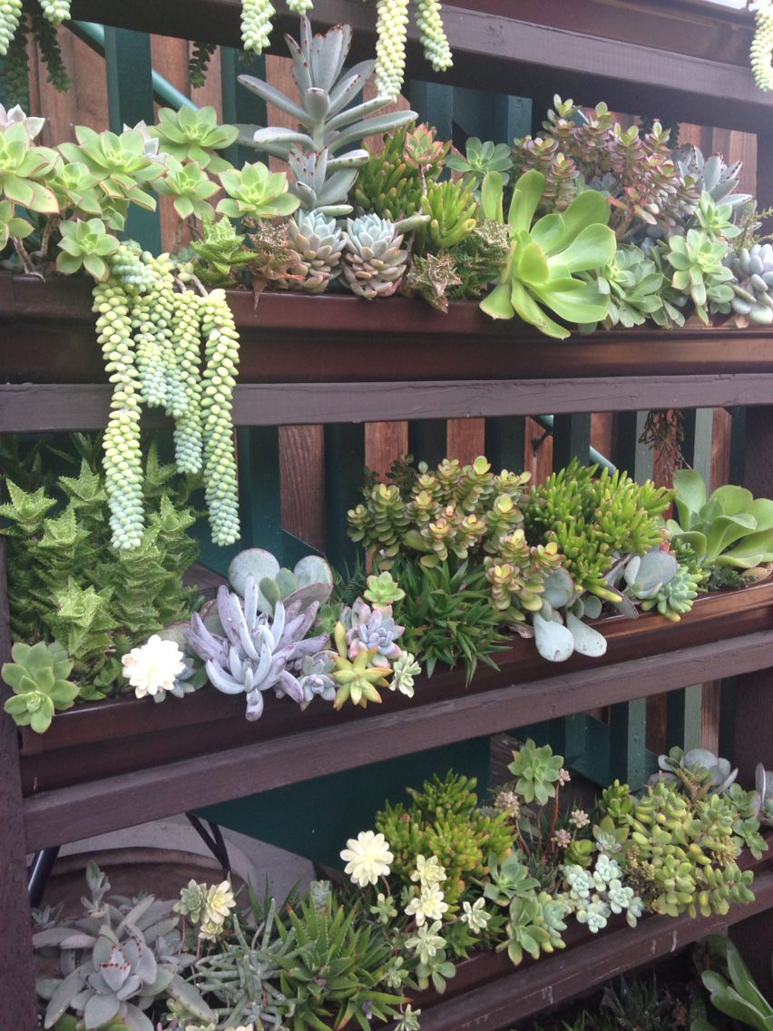 Succulent Cafe In Oceanside, CA. Succulents Planted In