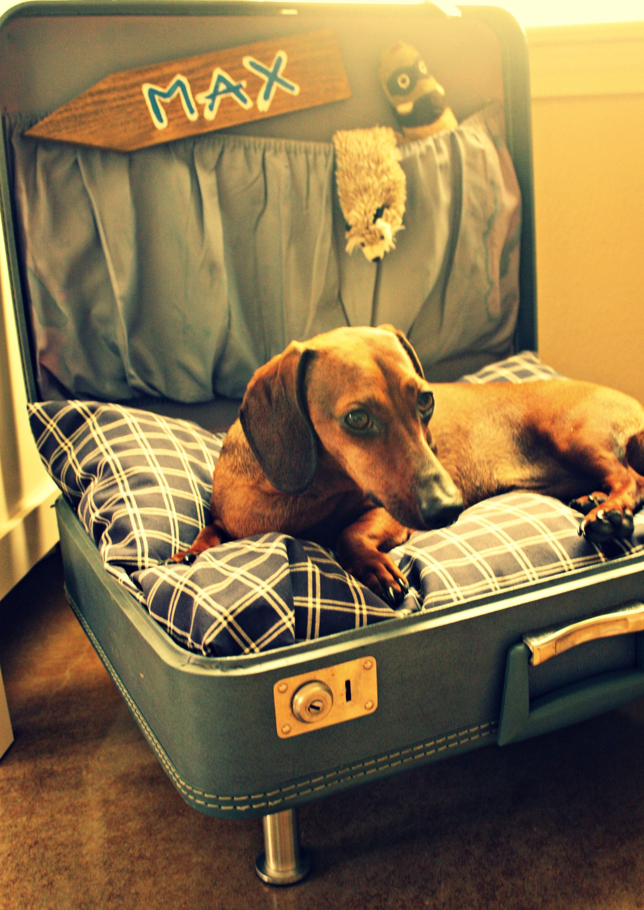 dog bed i made Cool dog beds, Diy dog bed, Creative dog bed