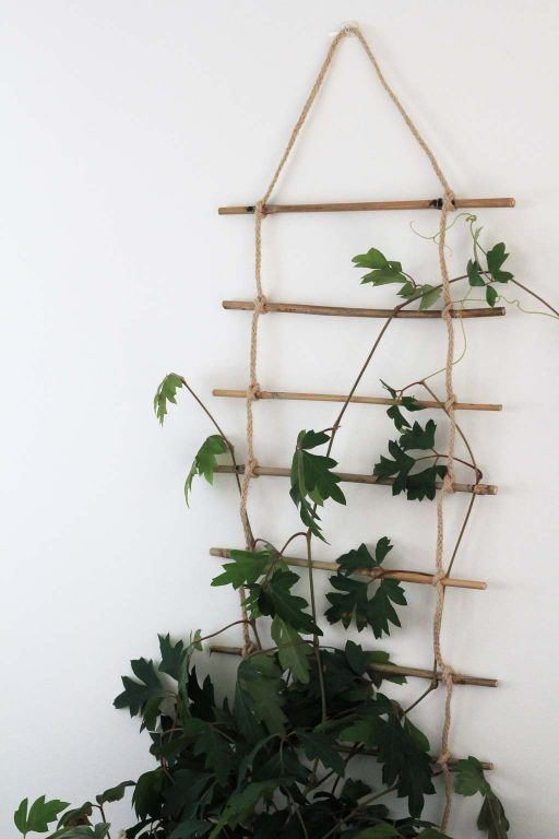 DIY Indoor Plant Trellis is part of Trellis plants, Indoor trellis, Indoor plant trellis, Indoor climbing plants, Indoor plants, Potted plants outdoor - Looking for an alternative to get your climbing plant growing indoors  Try making this DIY Indoor Plant Trellis! Try it with Philodendrons, Ivy and more